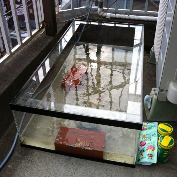 アクリル「奇跡」亀の水槽