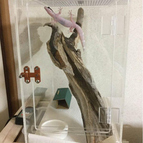 ヤモリ 飼育ケース