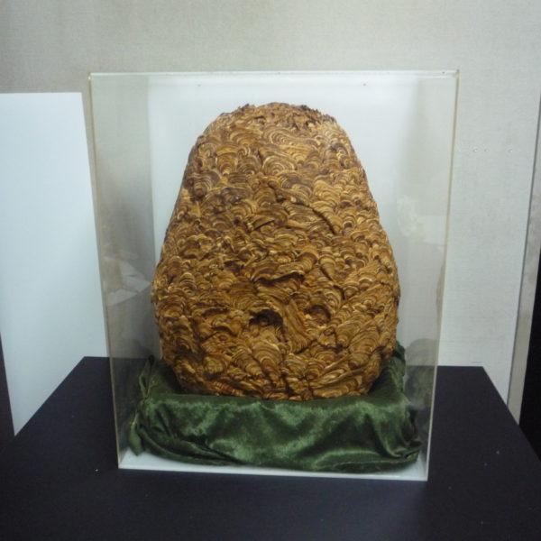 スズメ蜂の巣 アクリルケース
